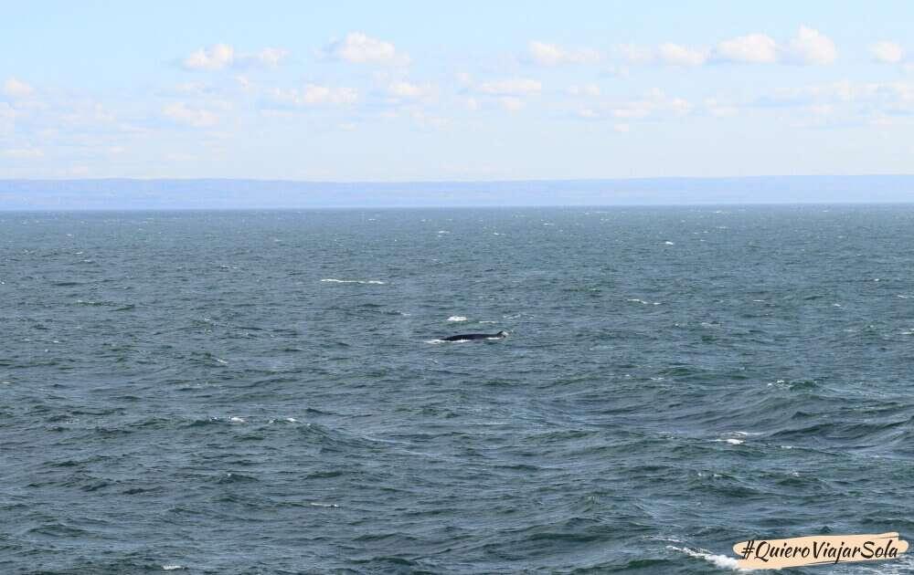 La experiencia de ver ballenas en Quebec
