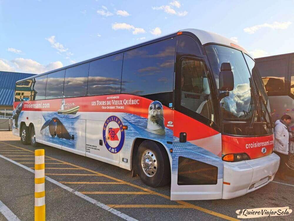 Ballenas en Quebec, autobús AML