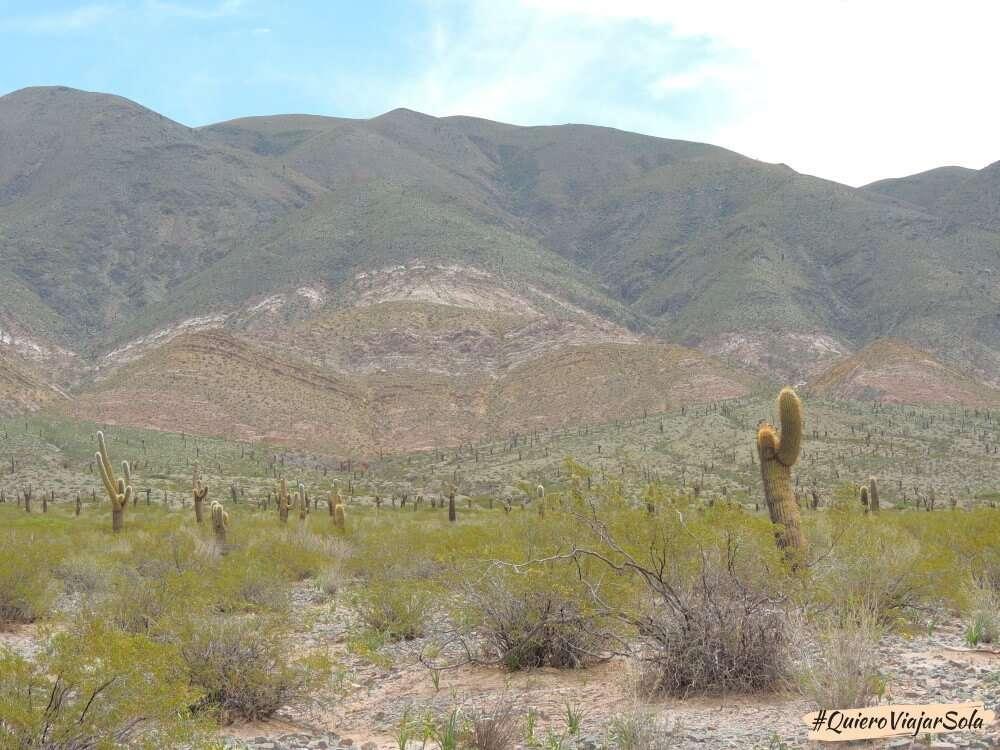 Excursión a Cachi desde Salta, Parque Nacional de los Cardones