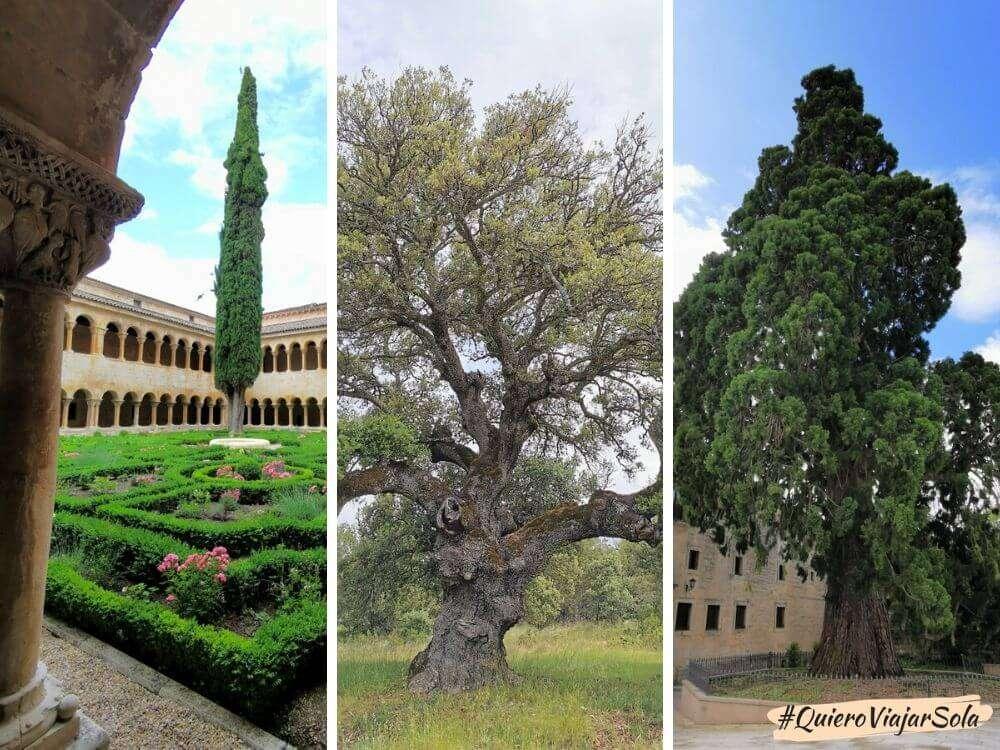 Visitar Santo Domingo de Silos, árboles catalogados