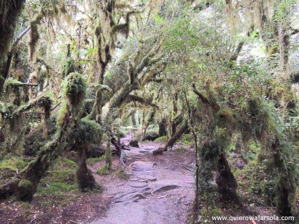 Qué ver en el Parque Nacional Queulat, Bosque Encantado