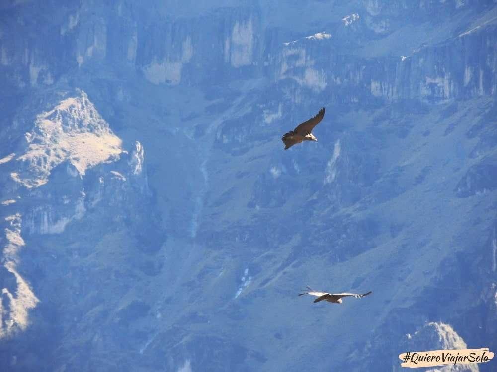 Visitar el Valle del Colca Arequipa, Cruz del Cóndor