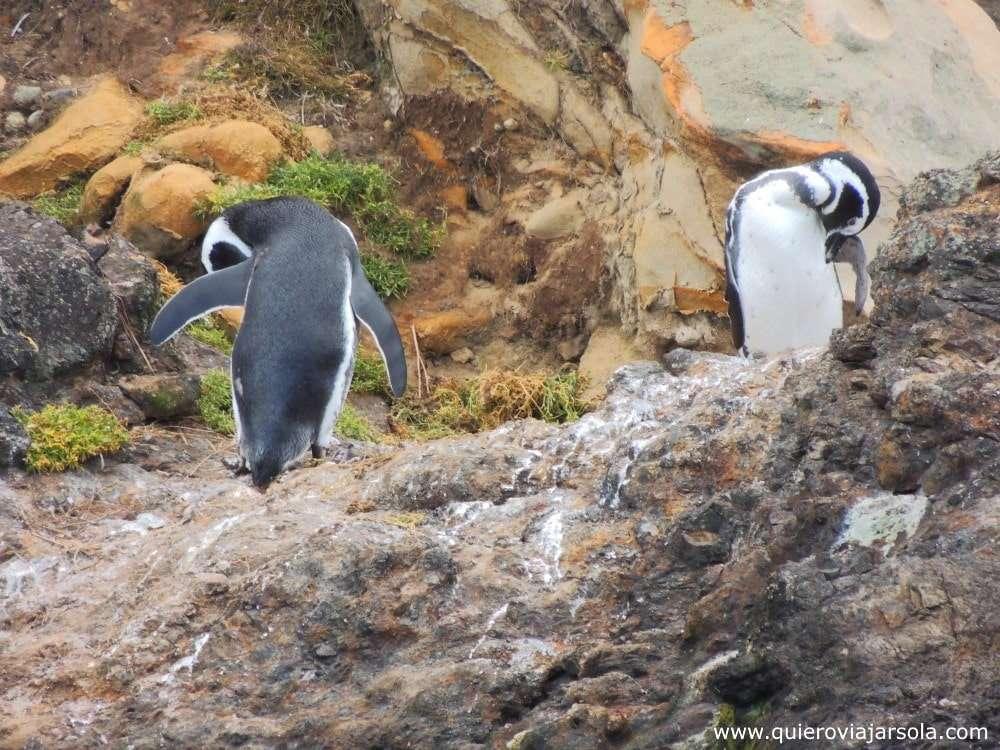 Qué hacer en Ancud, pingüinos