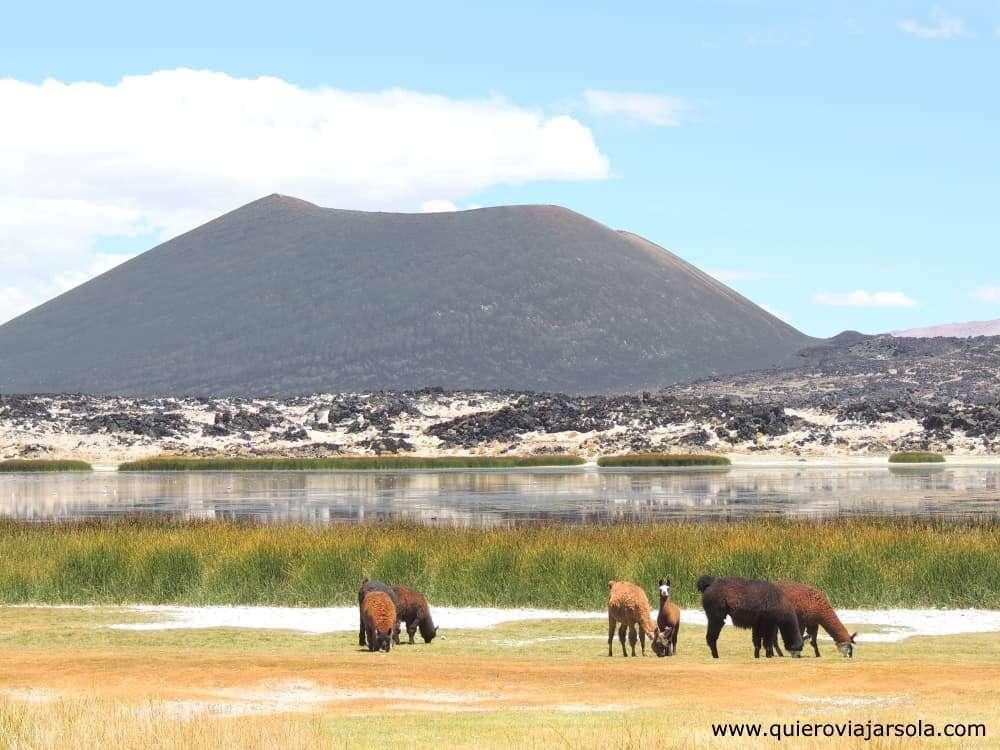 Antofagasta de la Sierra, Volcán Antofagasta