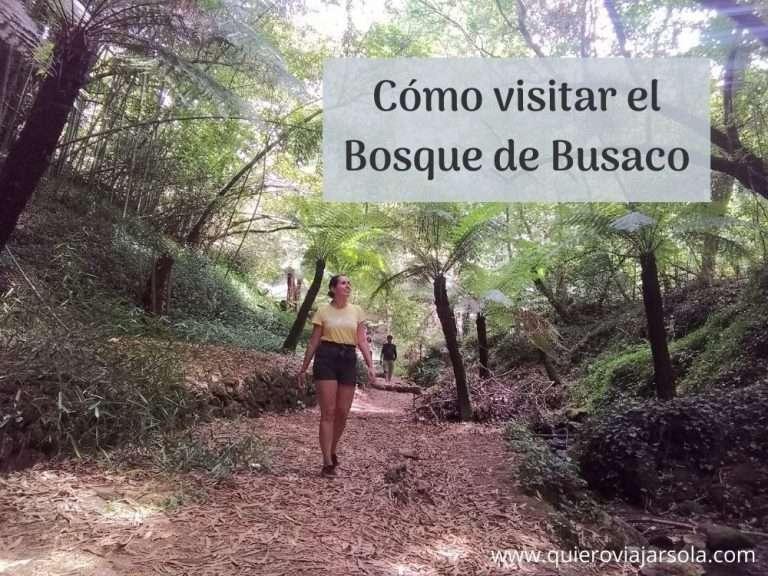 Visitar el Bosque de Busaco