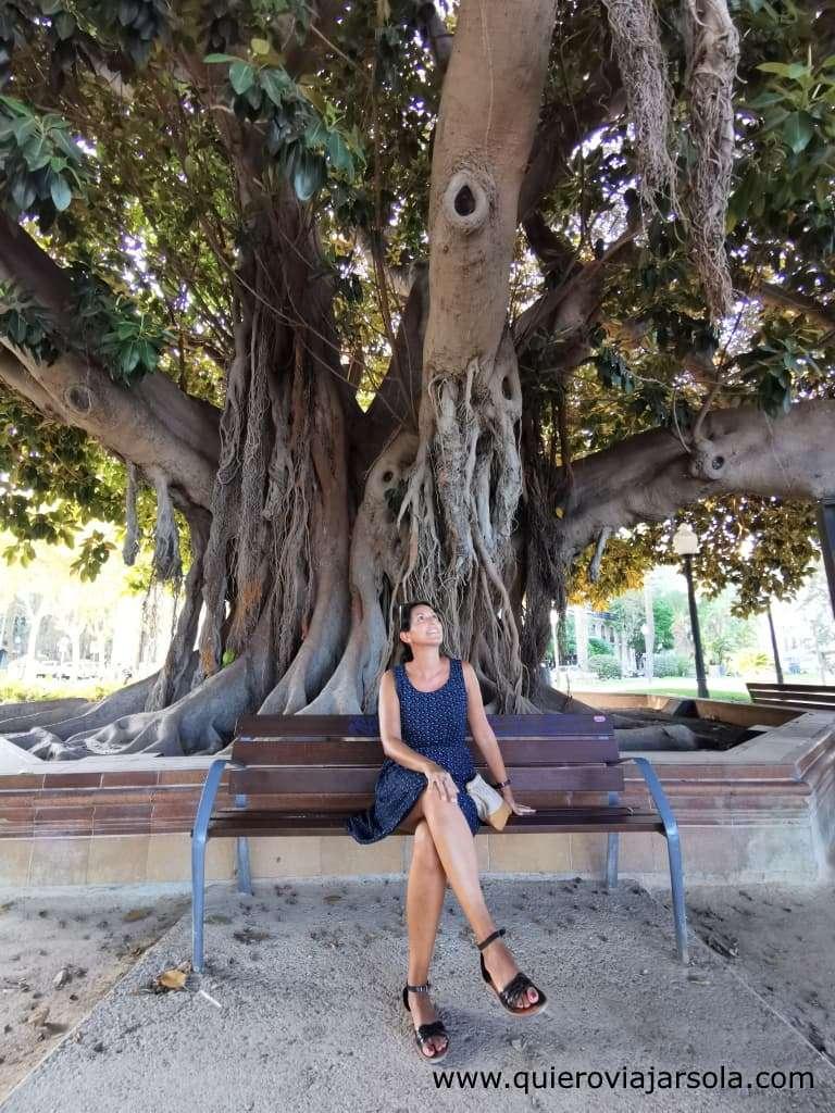 Viajar sola a Alicante, ficus monumental